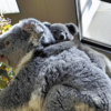 コアラの赤ちゃん 名前決まりました。