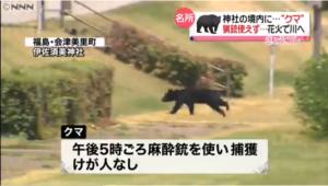 伊佐須美神社 熊