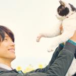 旅猫リポート泣けるネタバレと福士蒼汰の猫ファースト