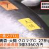 マグロ豊洲初競り2019すしざんまい落札過去最高値の3億3,360万円!!